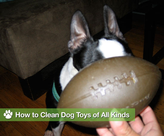 How to Clean Dog Toys of All Kinds