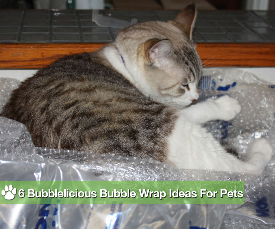 6 Bubblelicious Bubble Wrap Ideas For Pets