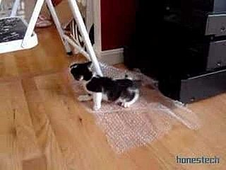 Happy Bubble Wrap Appreciation Day!