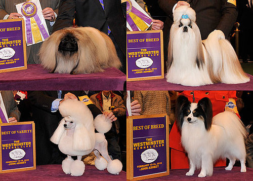 2010 Toy Group Winners at Westminster