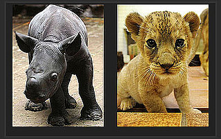 Baby Animals Are so Cute, but Which Is Cuter?