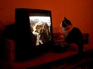 Sunday Funday Video: Curious Cat Wants to Literally Be on the TV