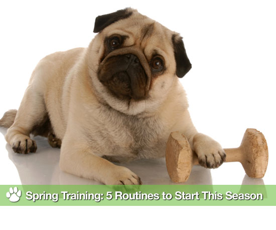 Spring Training: 5 Routines to Start This Season