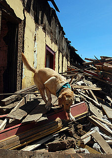 Help Animal Rescue in Haiti and Chile: In the LINK of an Eye!