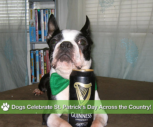 St. Patrick's Day Dogs