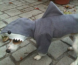Hello, Sharkdog
