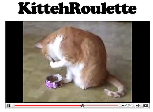 Website of the Day: KittehRoulette