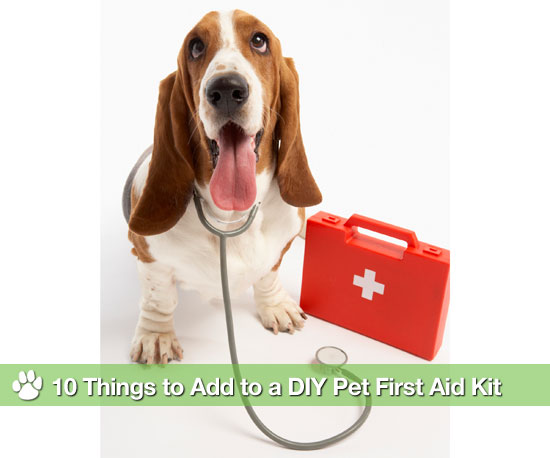 10 Things to Add to a DIY Pet First Aid Kit