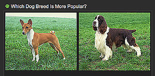 Do You Know Which Breed Is More Popular? 2010-07-09 04:00:12
