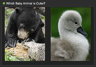 Which Zoo Animal Is the Cutest