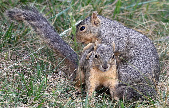 Squirrels Play Leapfrog, Too?!