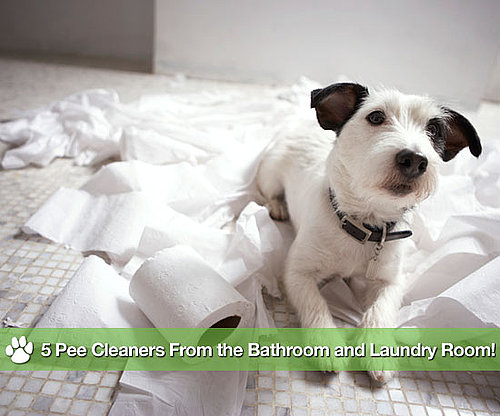 Natural Cleaners For Pet Urine Stains