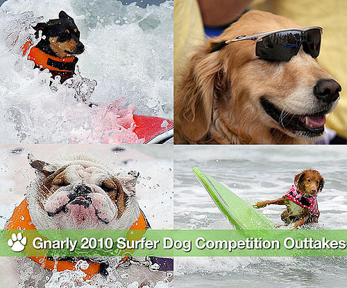 Pictures From the 2010 Dog Surfing Competition