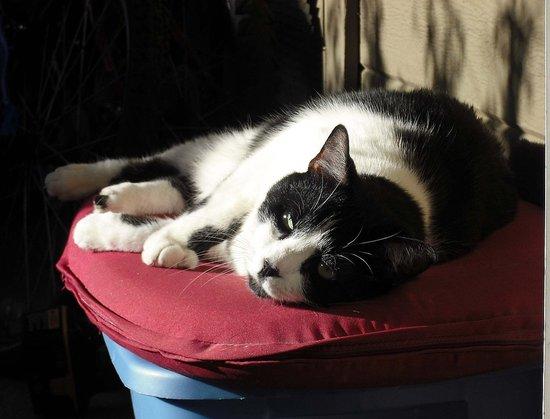 Sunbathing- Again..