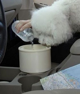 Travel Water Bowls For Dogs