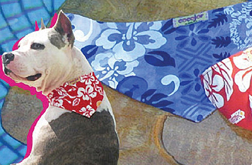 Cooling Bandanas For Dogs
