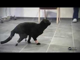 Bionic Cat Gets Prosthetic Paws