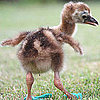 Wild and Wacky News 2010-07-17 04:00:40