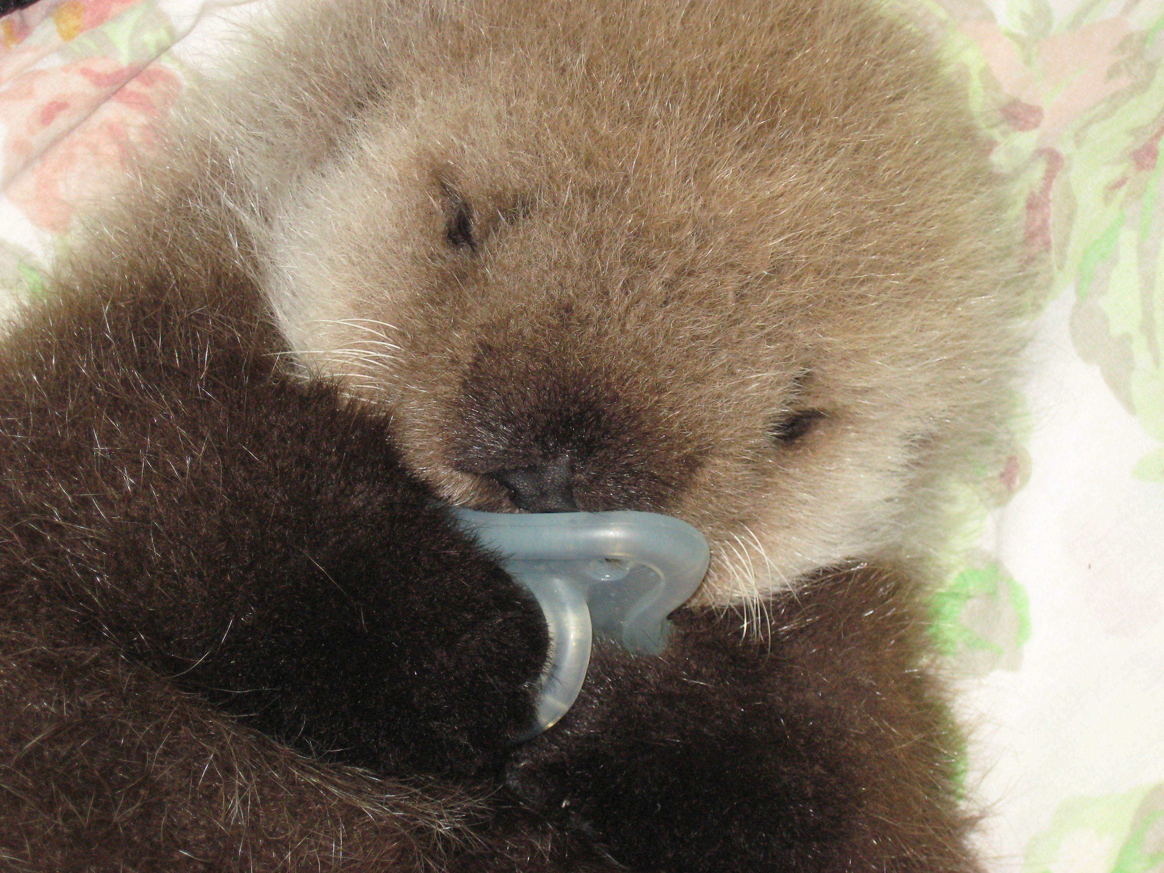 Pictures Of Baby Otter Popsugar Pets