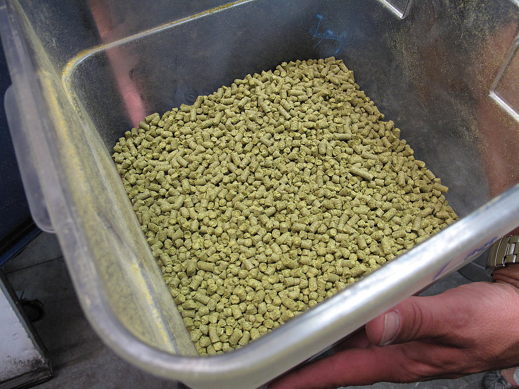 "Seasonally, the brewery makes beer out of ""green hops,"" or the fresh buds of the hops plant Humulus lupulus. The rest of the year, Hillyard uses processed hops (pictured), which have a flavor that is less variable and easier to control."