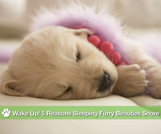 Wake Up! 5 Reasons Sleeping Furry Beauties Snore
