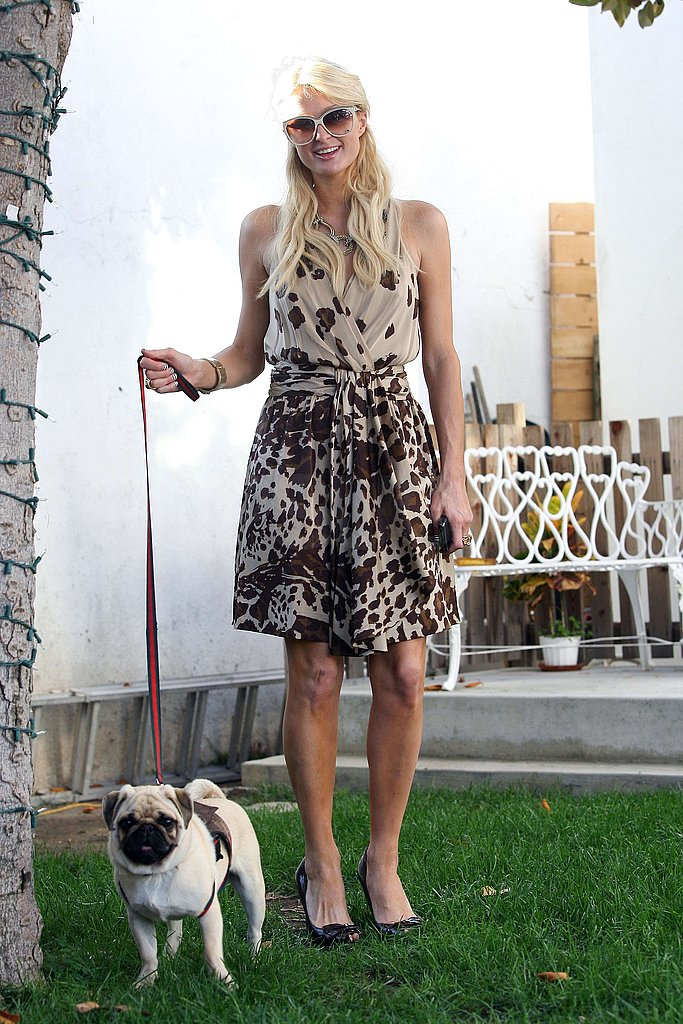 Pictures of Paris Hilton and her New Pug
