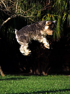 Picture of Dog Jumping High
