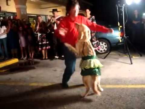 Doggie Dances Merengue