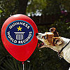 What Animals Set Guinness World Records?
