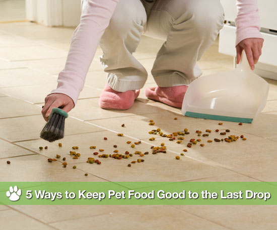 5 Ways to Keep Pet Food Good to the Last Drop