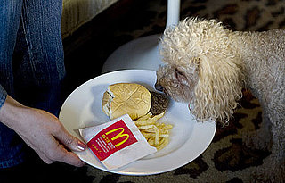 Happy Meal Project and Sally Davies' Dog