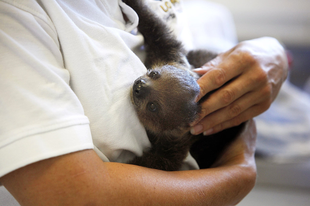 Bimba and Hugo's Sloth Babies