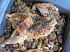 Roast Chicken With Sage Stuffing