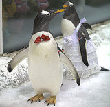 Pictures of a Penguin Wedding