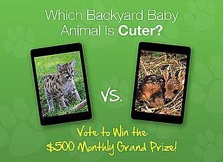 Which Backyard Animal Is the Cutest?