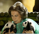 Madrid's Baby Pandas Greet the Queen