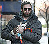 Hugh Jackman&#039;s New Dog and Pictures of Hugh Jackman and His New Dog, a French Bulldog Puppy