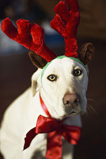 Buy Reindeer Costumes For Dogs