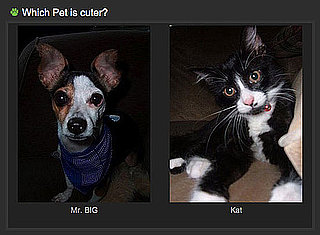 Cute Pet Faceoff Game