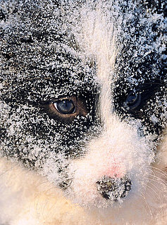 Pictures of Dogs in Snow