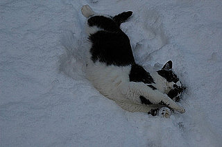 Do Cats Like the Snow?