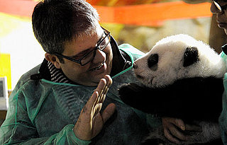 Po the Giant Panda in Madrid