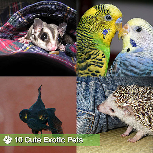 Pictures of Exotic Pets