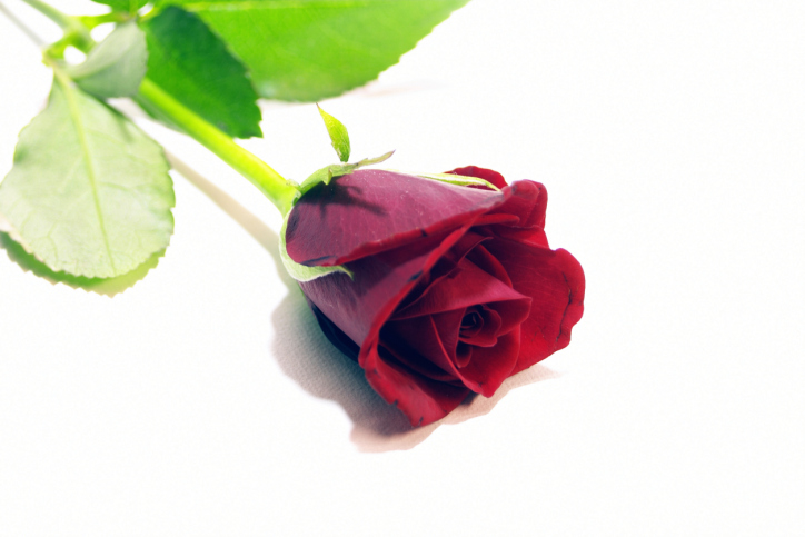 "Pick up a bouquet of red roses at the grocery store. When your friends arrive, open the door with a flourish while holding a single red rose. Greet them by saying, ""Will you accept this rose?"" Your friends can take the roses home with them at the end of the night as party favors."