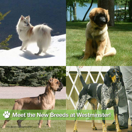 Meet the 6 New Breeds at the Westminster Dog Show!