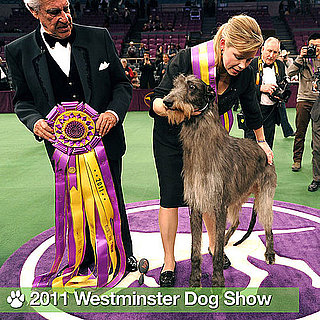 Pictures of 2011 Westminster Dog Show Winners