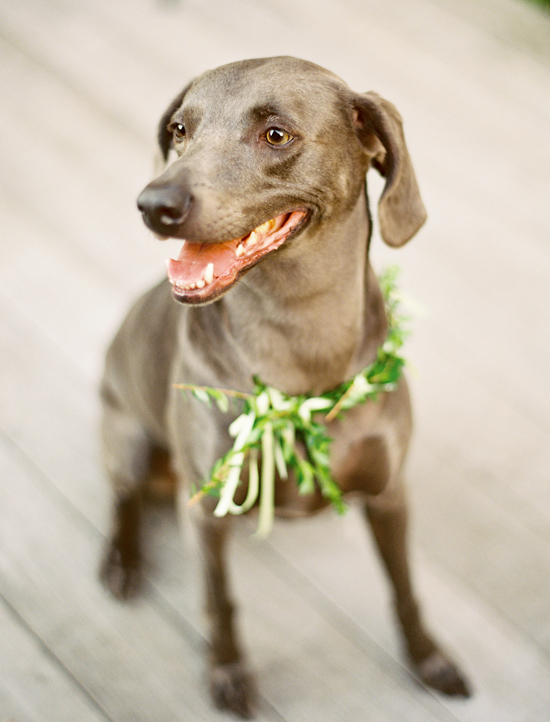 Simple greenery gave this doggie some wedding flair.  Photo by Jen Curtis Photography