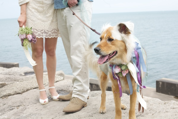 For this secret wedding, the pup was outfitted in ribbons.  Photo by Simply Jessie Photography