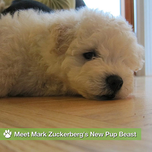 Pictures of Mark Zuckerberg's New Puppy Beast
