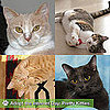 Pictures of Cute Cats to Adopt 2011-03-15 03:00:00